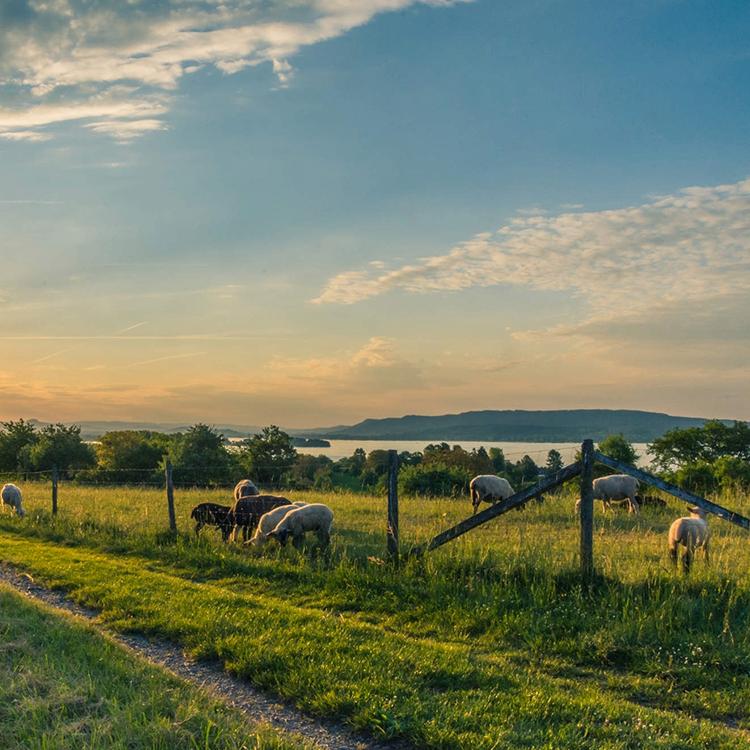 champs au coucher de soleil